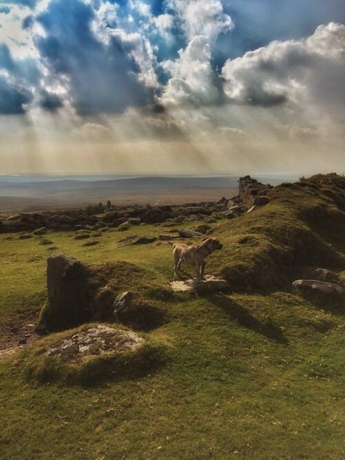Lucky on Dartmoor