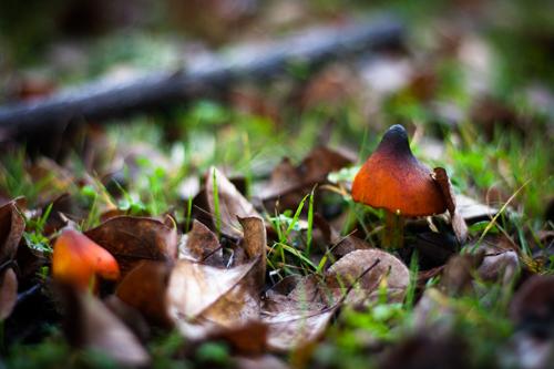 Mushroom Foraging with John Wright